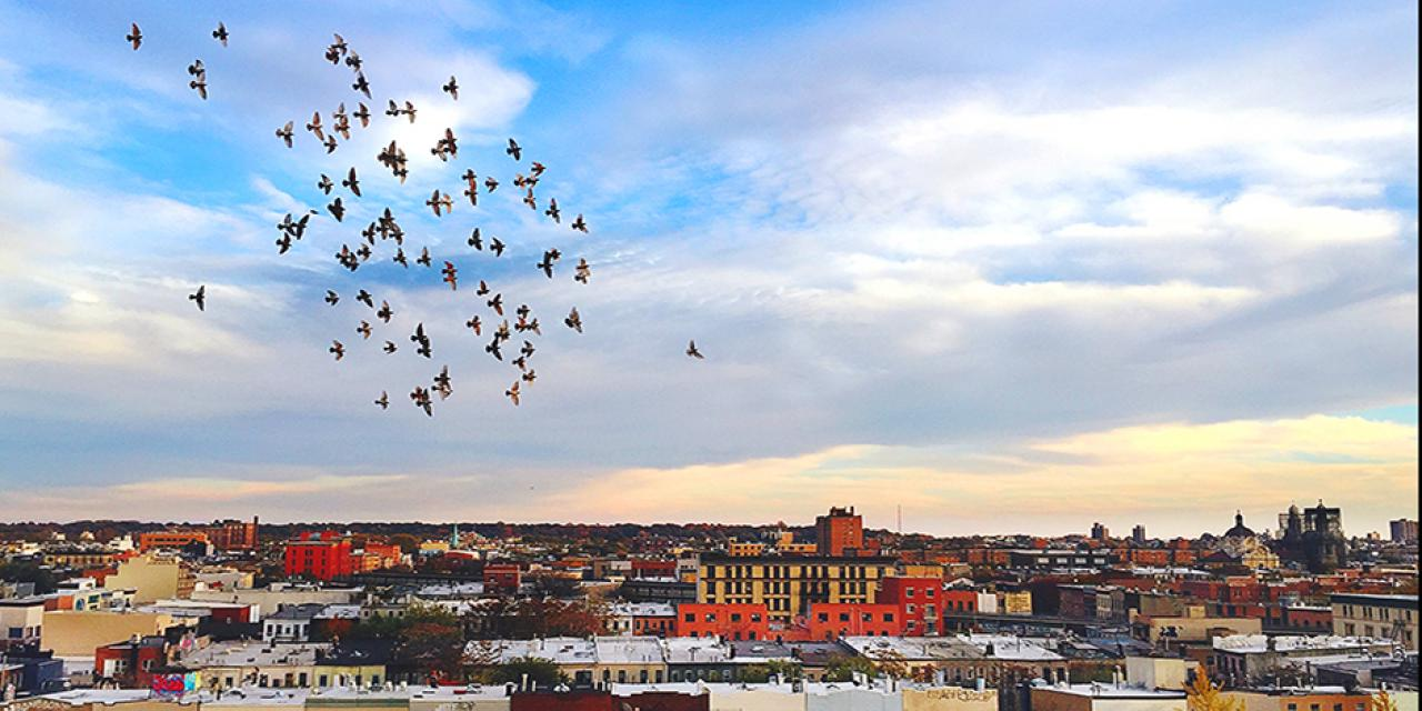 Shot on the rooftop of a building in Brooklyn, New York. A group of birds rotate in the November sky, while the dusk begins to shadow its color on the time-worn architecture. - Kejie Wang (New York)