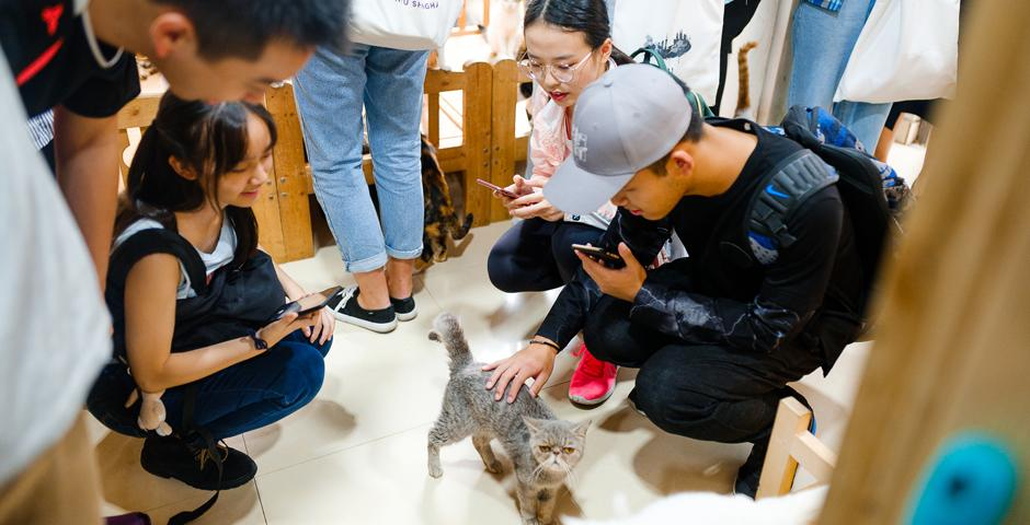 Students volunteered in an animal shelter run by the China Small Animal Protection Association (CSAPA).