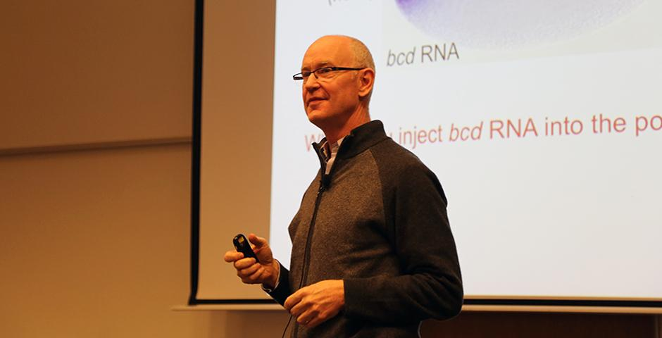 Professor Stephen Small discussed the molecular mechanisms in gene expression for the fruit fly Drosophila on February 17. (Photo by: Xinyi Xu)