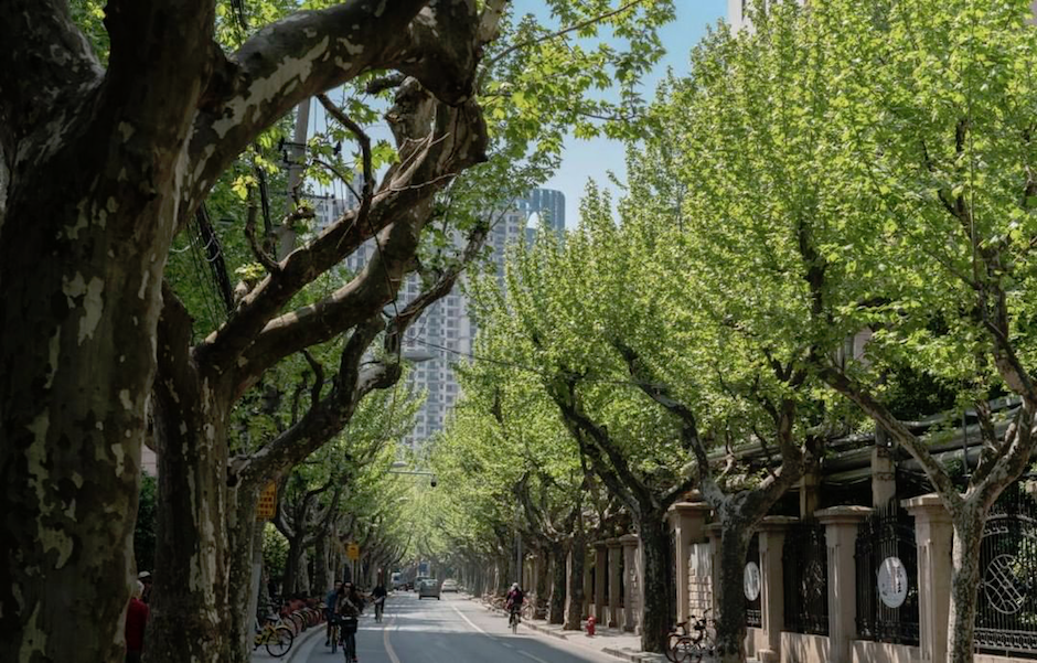 July 27: Strolling through the Former French Concession into the weekend.