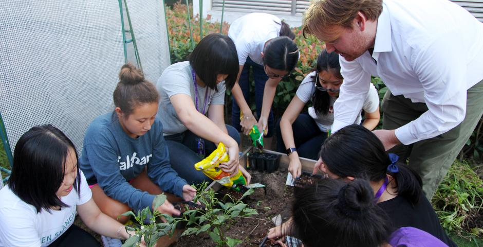 On September 13, NYU Shanghai's Green Shanghai club held an urban farming activity in the campus's backyard among their greenhouse, two raised beds, a solar energy system and composting system. All community members (students, faculty and staff) can make use of the urban farm for recreational or academic purposes: growing their own vegetables and fruits, experimenting with agriculture techniques, composting and solar energy. (Photo by: NYU Shanghai)